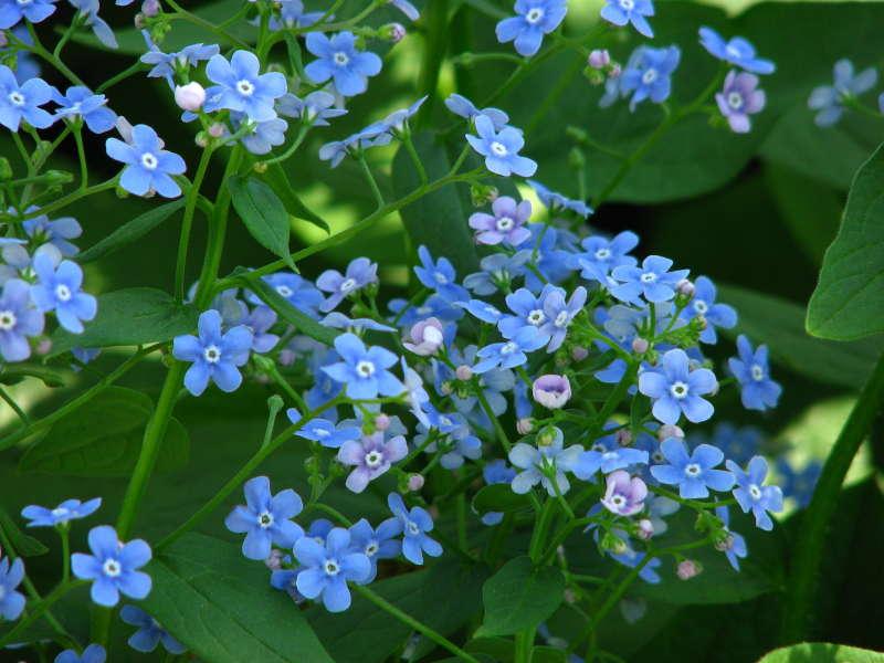 Цветы для дачи: многолетники