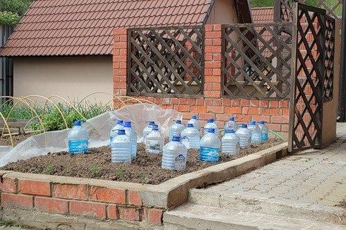 Бутылки 5 литров и выращивание огурцов