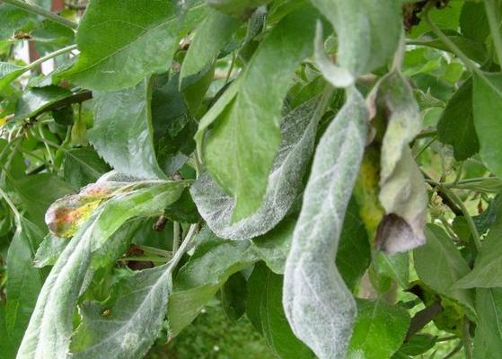 Лечение псориаза в сергиевом посаде
