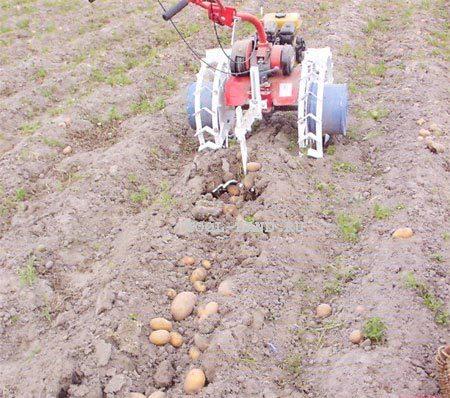 как сажать картофель на участке