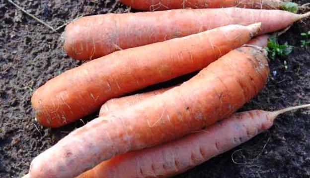 Заморозка моркови