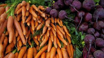 когда собирать свеклу и морковь