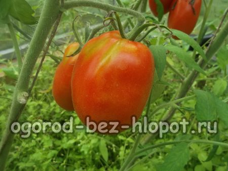 Рассада помидор в домашних условиях