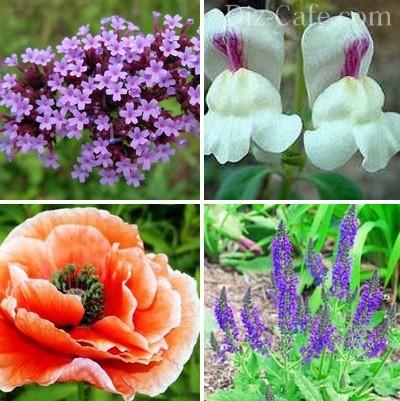 цветы для дачи цветущие все лето фото с названием