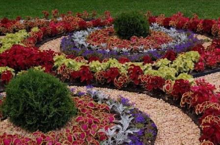 цветы многолетние, цветущие все лето