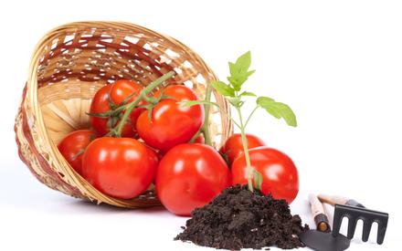 посадка помидор на рассаду в 2016 году