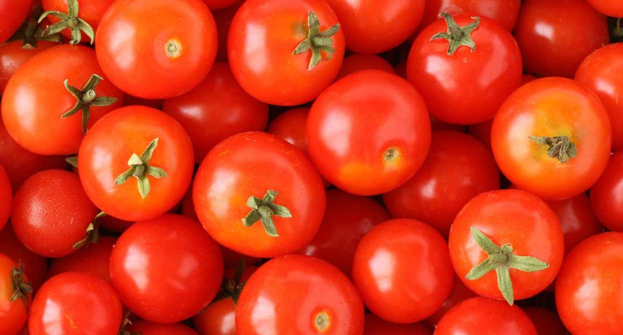 Новые сорта томатов на 2017 год для открытого грунта