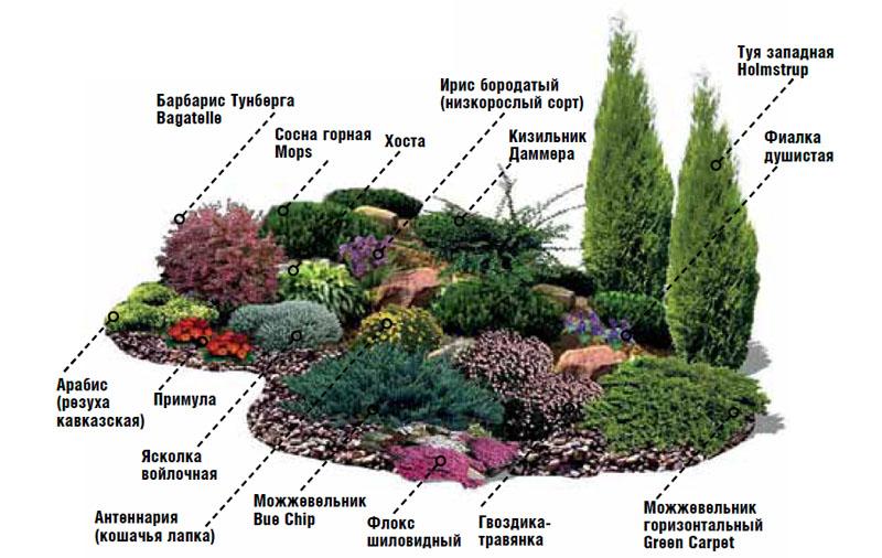 Растения для альпийской горка своими руками