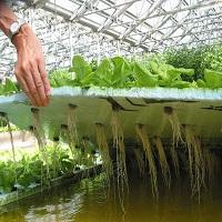 Гидропоника своими руками для огурцов и томатов