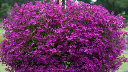 Однолетние цветы для дачи цветущие все лето: фото с названием