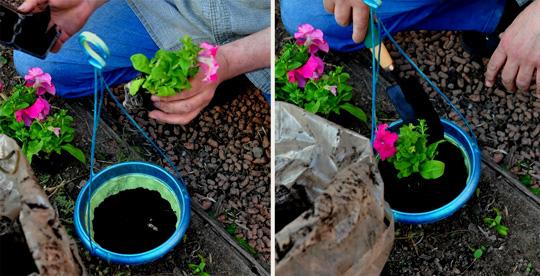 Во саду ли в огороде посадка петунии