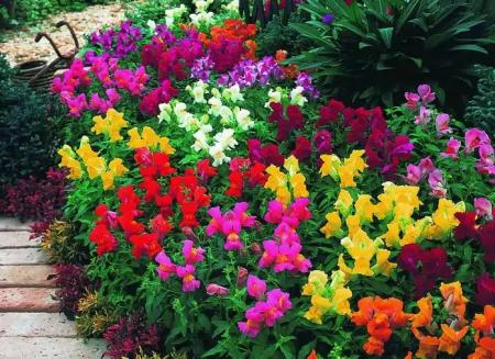 Когда сажать цветы на рассаду в 2016 году по лунному календарю