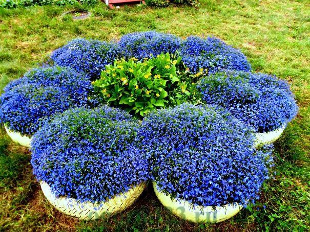 Посадка и выращивание цветов 68