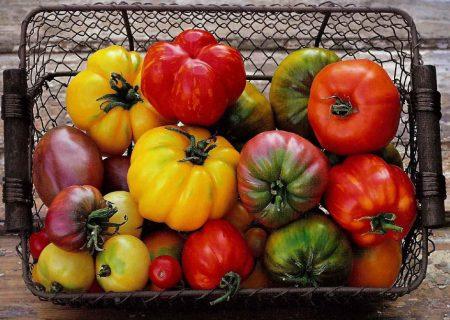 какие выбрать томаты для открытого грунта