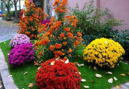 Многолетние цветы для клумбы, цветущие всё лето: низкорослые