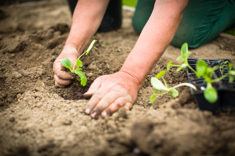 О сроках сева, возрасте рассады и совмещении посевов 60