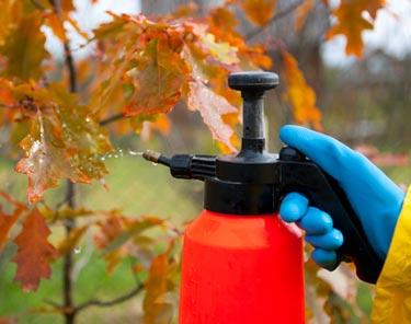 Чем обработать деревья и кусты в саду