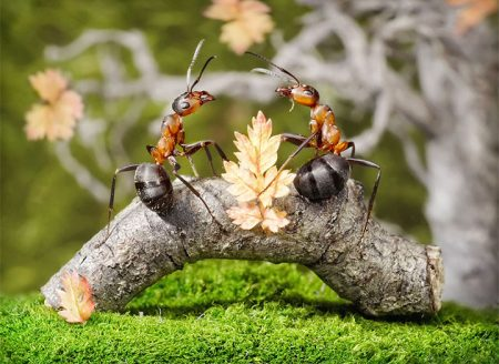 Как бороться с муравьями в саду и огороде
