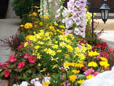 Однолетние цветы название и как сажать