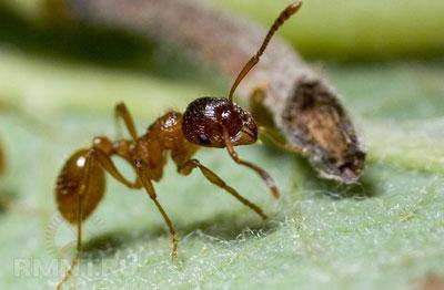 Как избавиться от муравьев в огороде