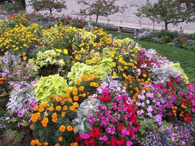 Сиреневые цветы для клумбы названия и 6