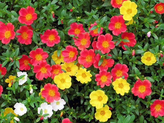 Какие цветы можно сажать в открытый грунт семенами 82
