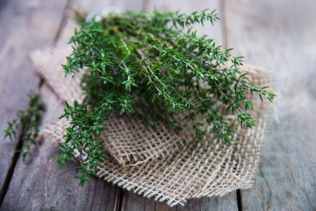 Тимьян- выращивание в открытом грунте в Подмосковье