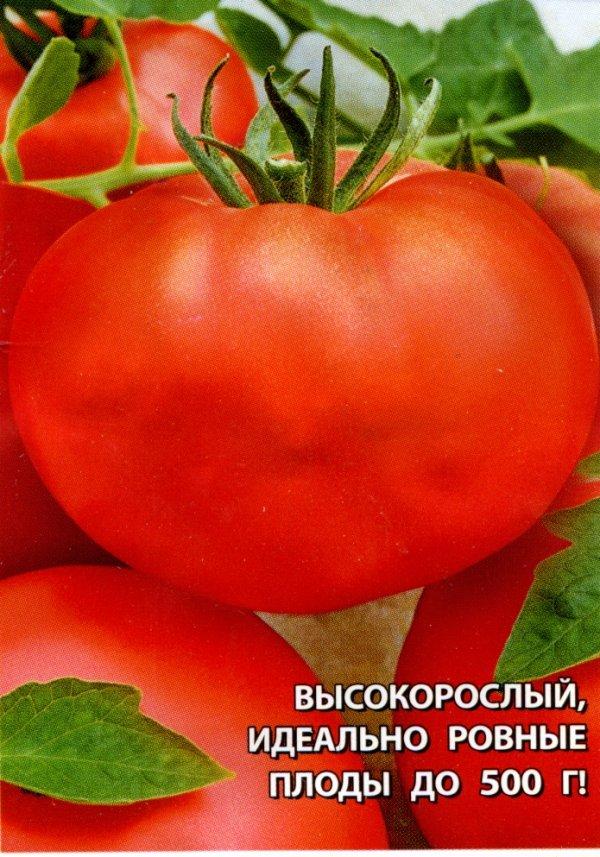 помидоры краснобай отзывы фото