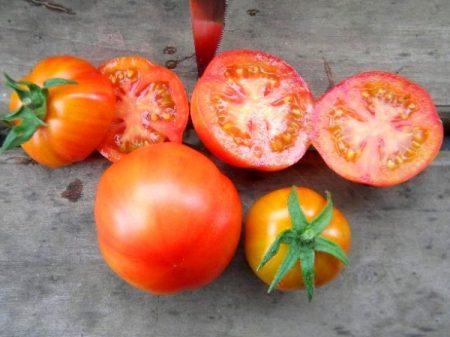 томат санька спелый