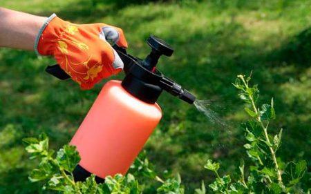 Борная кислота для растений, применение и чем помогает