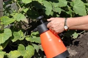 Борная кислота для растений, применение огурцы
