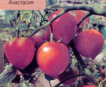 sort-anastasiya