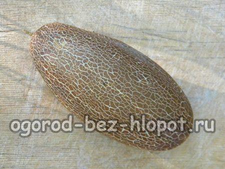 Переросший огурец для сбора семян