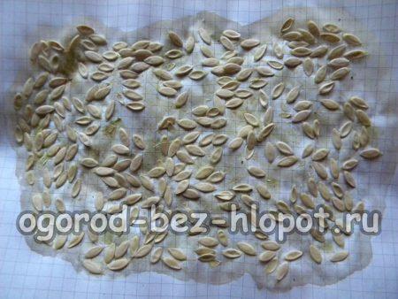 Высушенные семена огурца