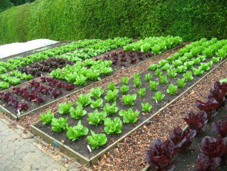 Красивый огород своими руками: как сделать красивые грядки