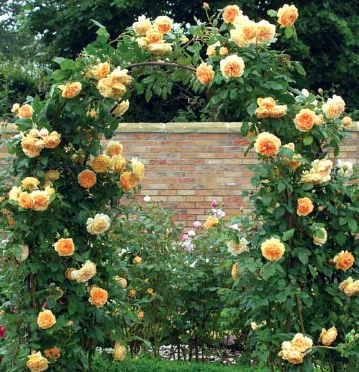Опора для штамбовых роз своими руками