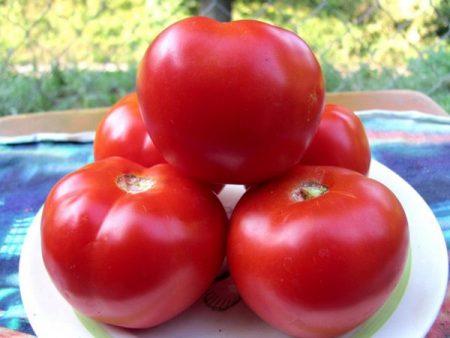 tomat-krasnym-krasno
