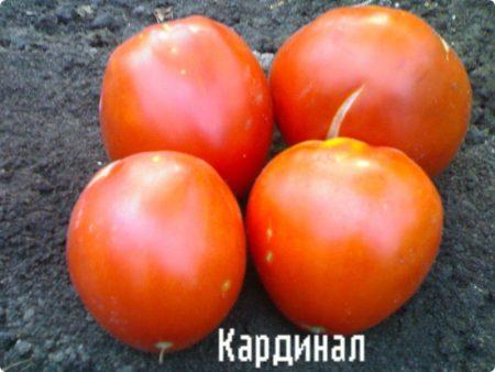 tomat-kardinal-urozhajnost-otzyvy