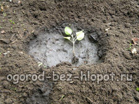 Разложите рассаду по лункам