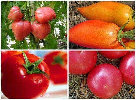 Лучшие сорта помидоров для Ростовской области