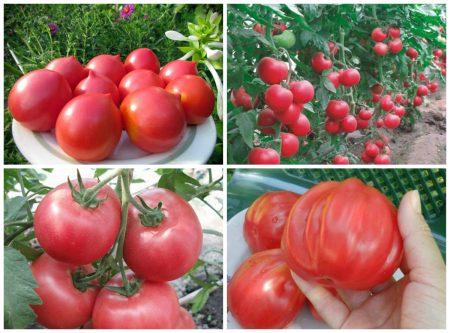Лучшие сорта розовых томатов для Ростовской области
