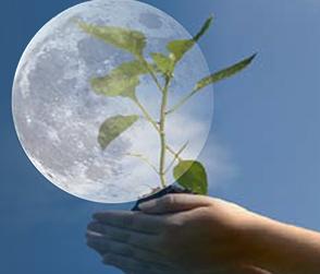 Sonniki лунный календарь