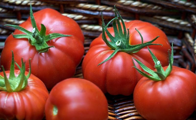 помидоры пузата хата фото