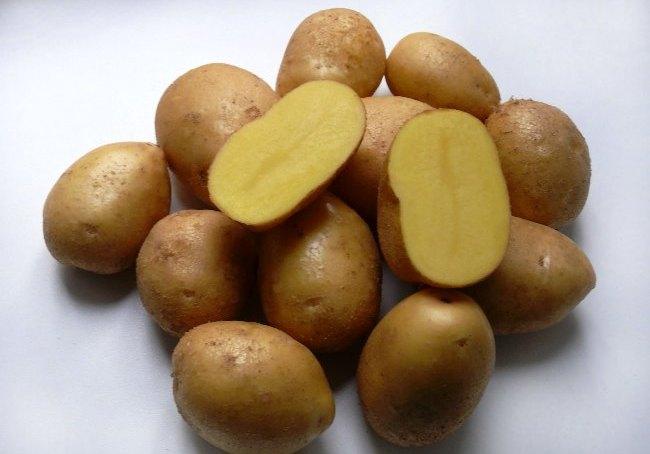 Картофель Импала: описание и характеристика сорта, фото, отзывы