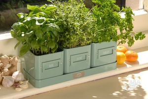 Выращивание зелени дома на подоконнике