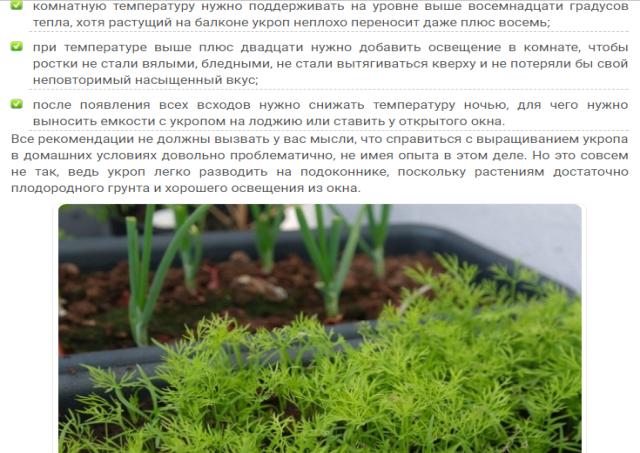 Укроп посев выращивание и уход 72