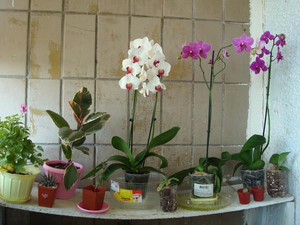 У орхидеи опали все листья что делать фото