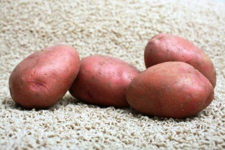 Сорт картофеля Гала фото отзывы описание характеристики