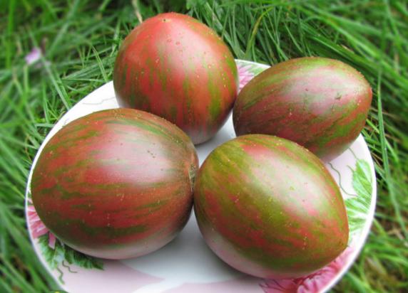 Болезни рассады томатов (помидоров) и их лечение в 56