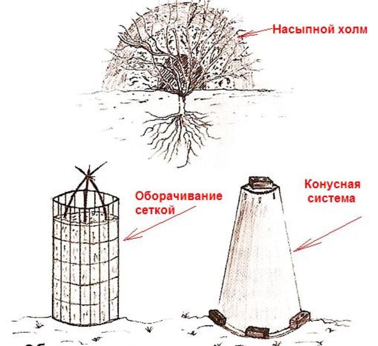 Подготовка роз к зимовке в подмосковье
